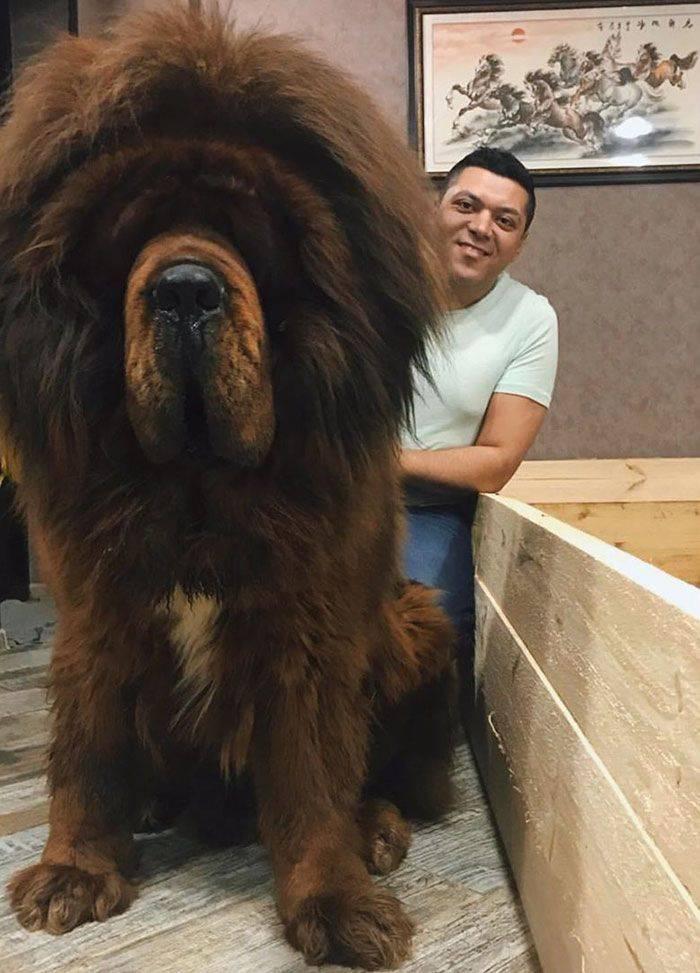 Dog worlds biggest Top 10