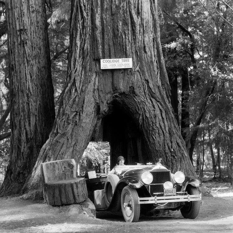 the wawona tree aka the tunnel tree