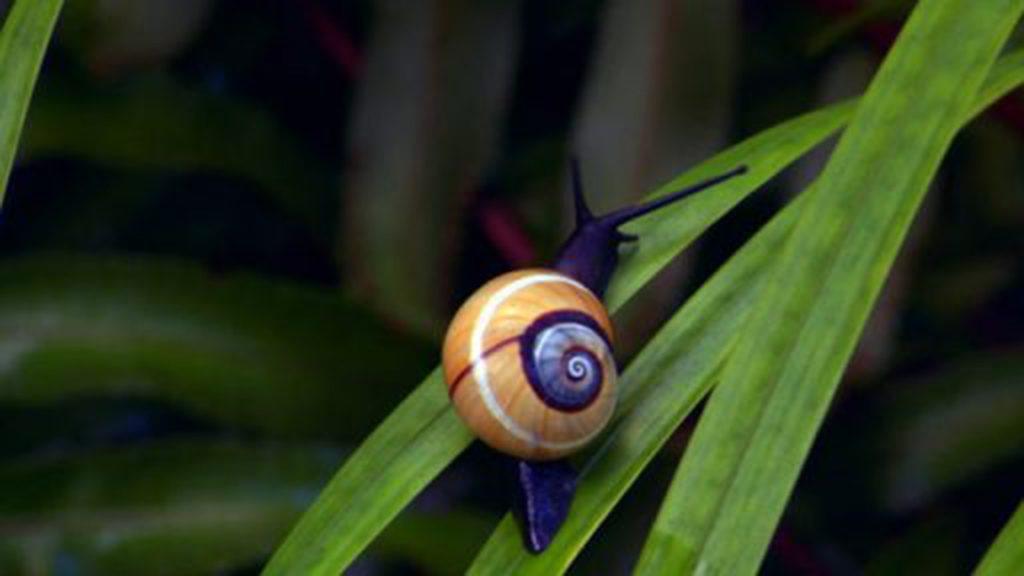 Cuban land painted snails beautiful
