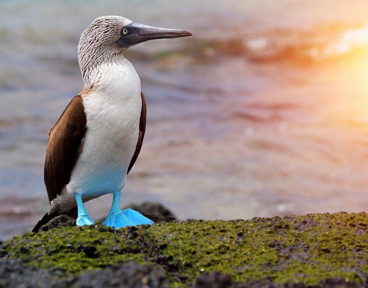 blue footed booby unique birds