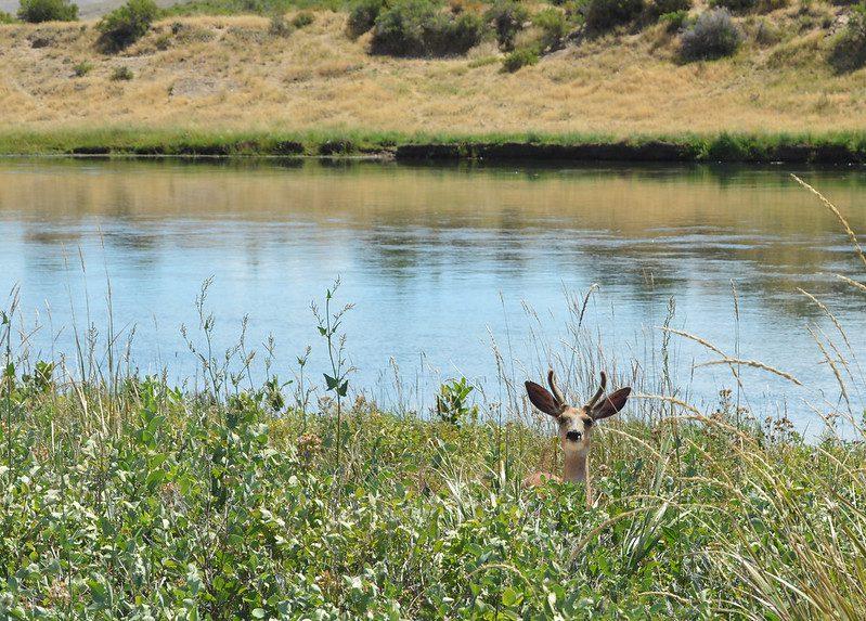 Owens lake california