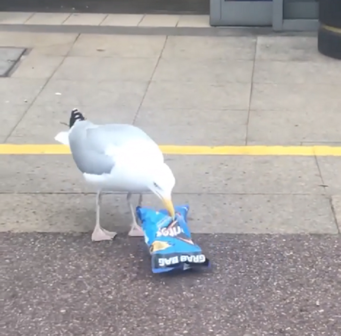 funny animal video seagull