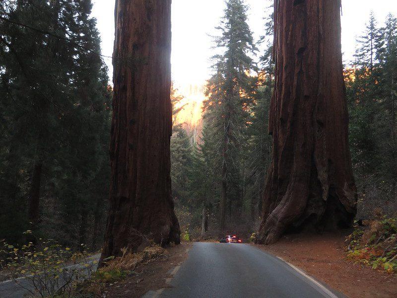 Sequoia national park california usa